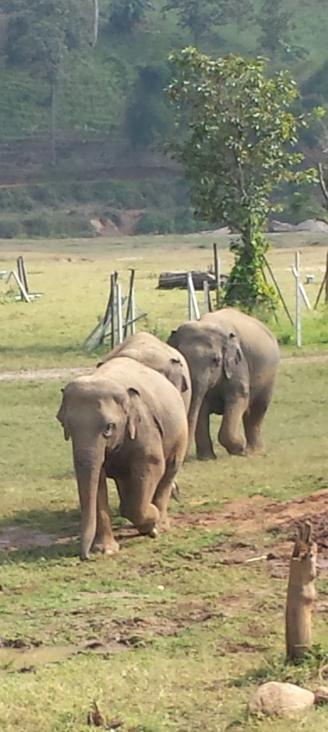 Elephant family at Elephant Nature Park