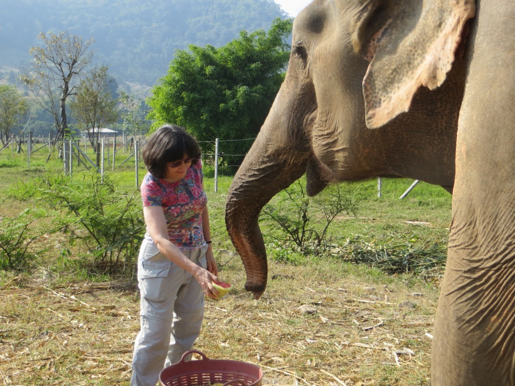 Feeding an elephant at the Elephant Nature Park