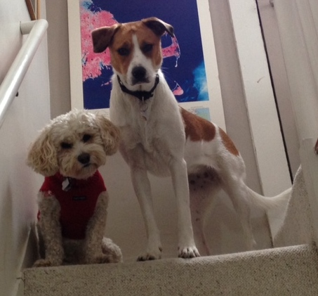 Dino and Izzy at the top of the stairs.