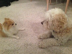 Dogs meeting each other