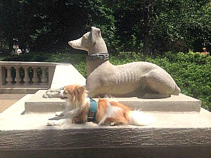 Philadelphia's Rittenhouse Square is very dog friendly.